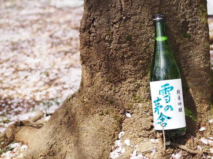 桜の樹の下で雪の茅舎
