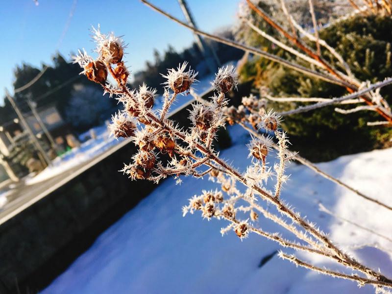 冬の日の朝〜2017〜