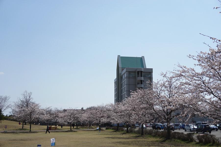 【お花見2017】サンルーラル大潟&秋田市太平川沿いの桜並木