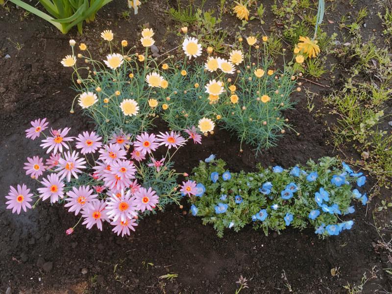 年中お花が楽しめる!ブルーメッセあきた「春のチューリップまつり」に行ってきた