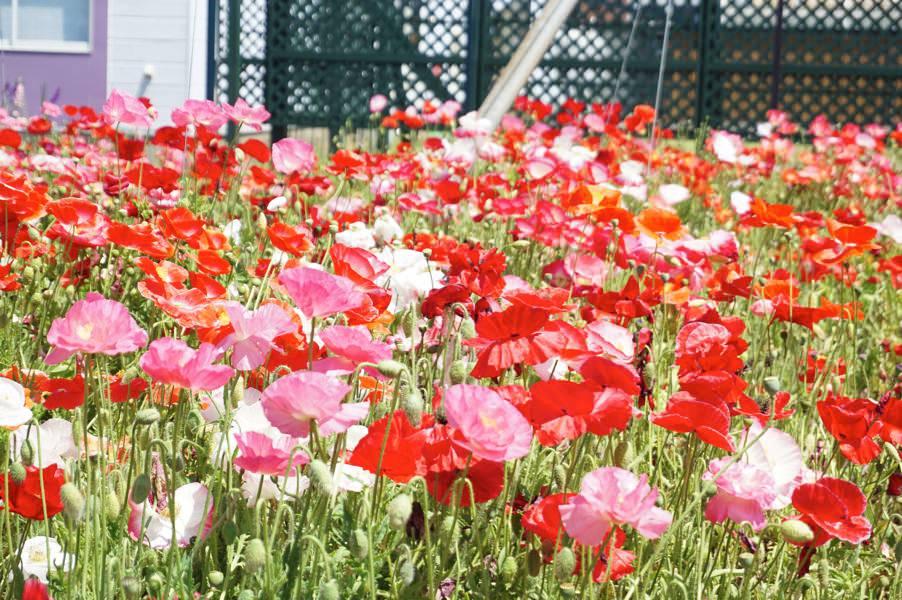 ゆっくり見てまわりたい、ハーブの楽園。由利本荘市ハーブワールドAKITA