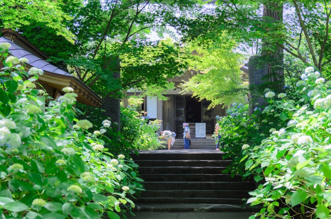 初夏の紫陽花と雲昌寺|秋田県男鹿市北浦