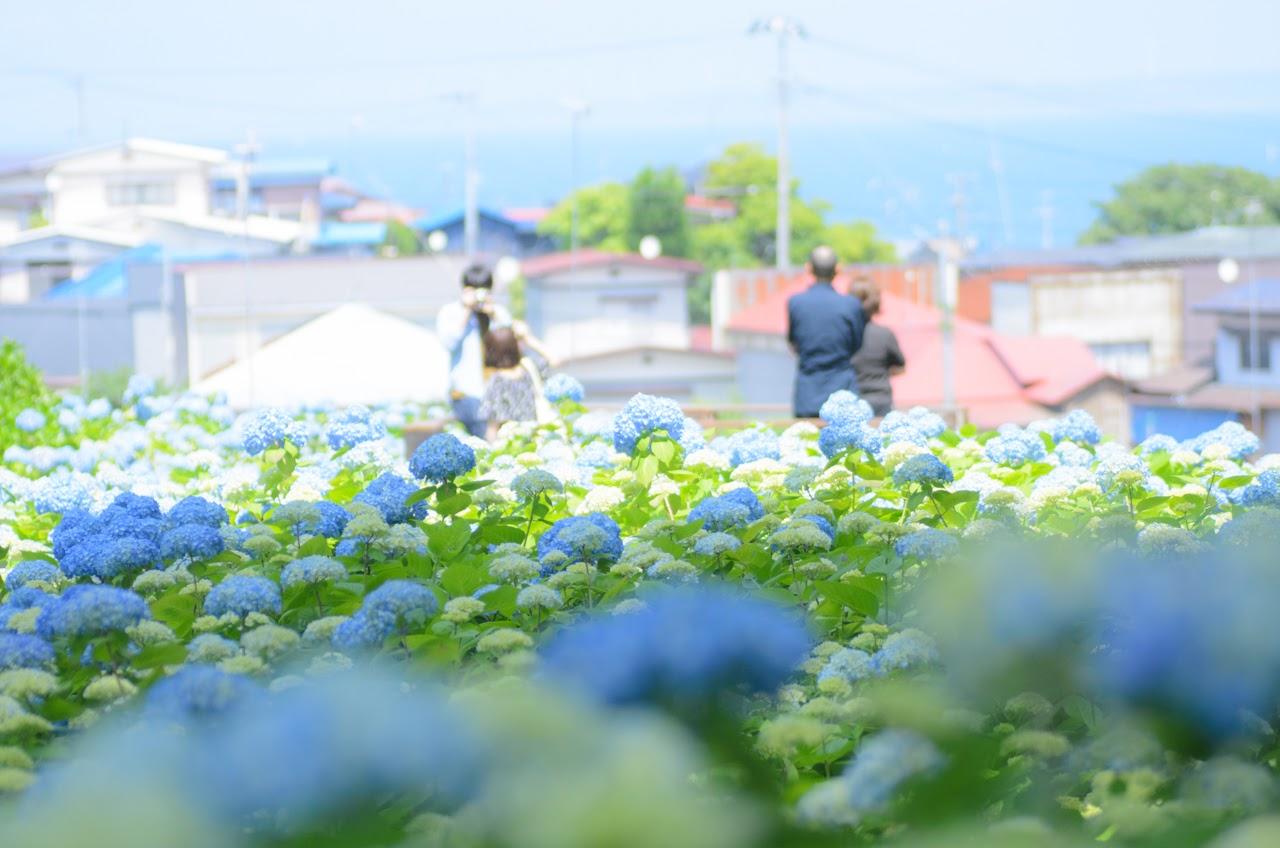 恋人やご家族と一緒に紫陽花を楽しもう