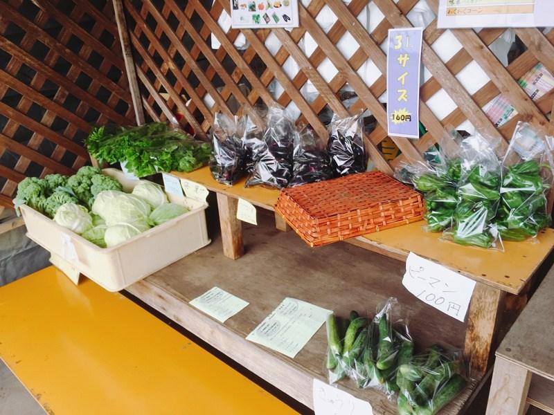 【北秋田市たかのすまち歩き】農園直販!やまだのきみの新鮮とうもろこし