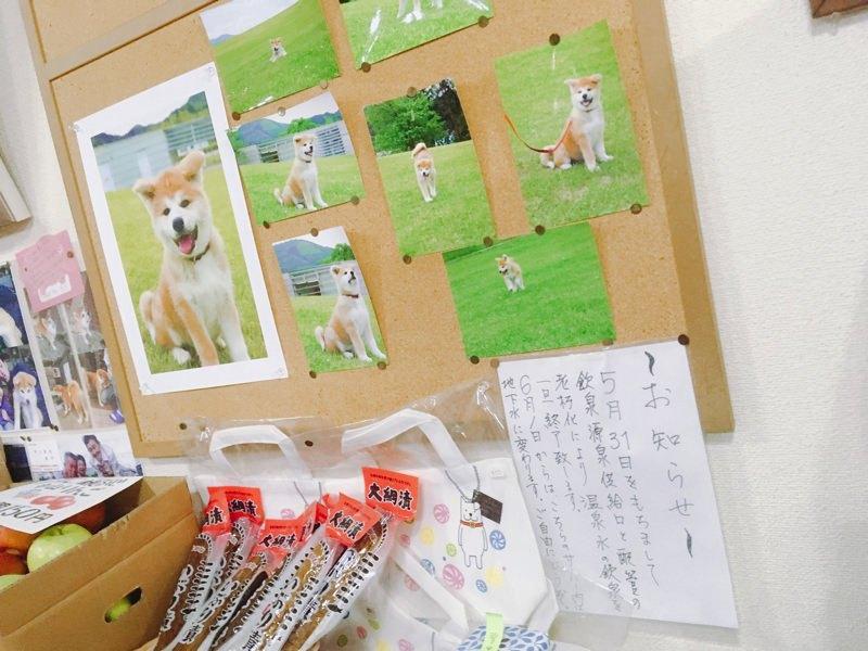 秋田犬の温(はる)ちゃんに会いにいこう!ふるさわ温泉 光葉館